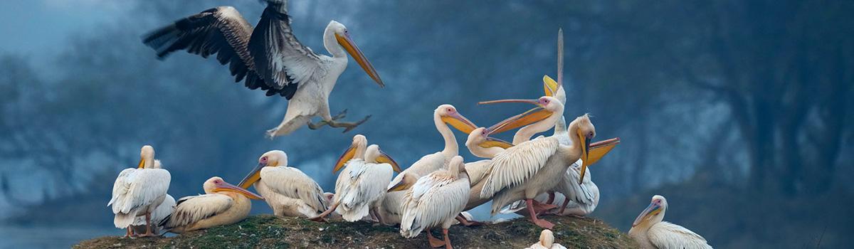 Bharatpur-Bird-Sanctuary